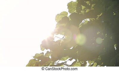 Sun shining through the leaves of the tree