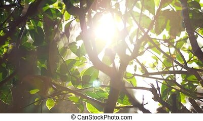 Sun shining through the tree branches during watering -...