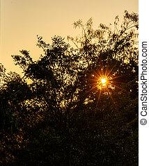 Sun shining through the trees