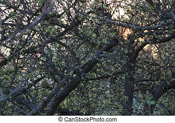 Sun Shining Through the Treetops