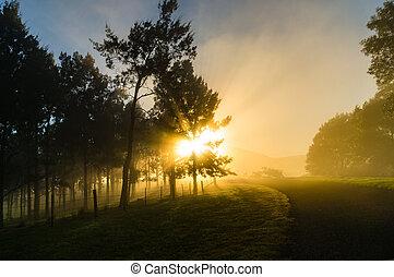 Sun shining through tree crowns and fog