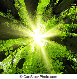 Sun shining through treetops - Eye-catching canopy scenery...