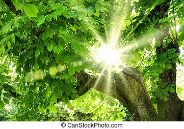 Sun shining through vivid green foliage