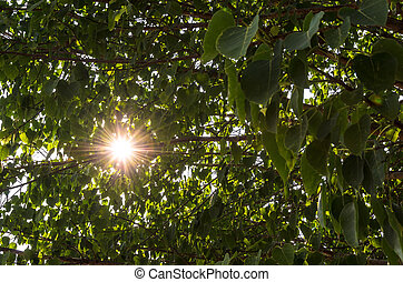 sun sparkling shine through tree leaf
