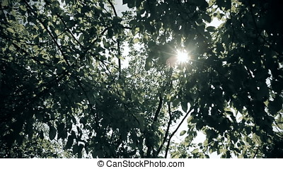 Sun Streaming Through Leaves - Sun streaming through leaves.