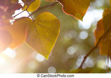 Sun streaming through Redbud leaves