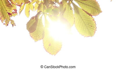 Sun streaming through the leaves