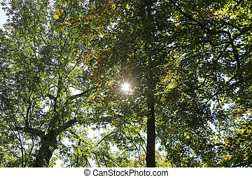 Sun through autumn foliage in the park
