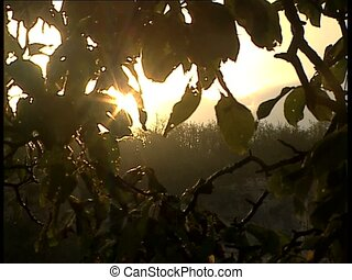 SUN through branches and leaves