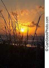 Sun Through Dune Grass at Myrtle Beach