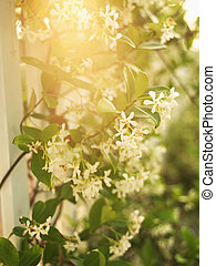 Sun through flowers.