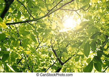 Sun through nut foliage in the summer