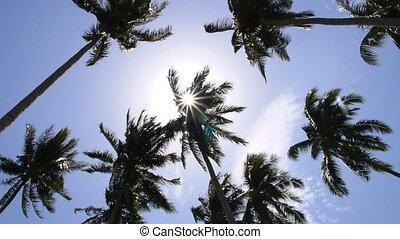 Sun through Palm Tree Leaves. Summer Beach. Slow Motion.