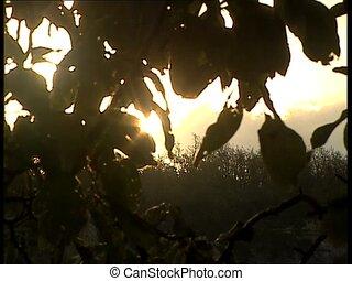 SUN through swaying leaves ms