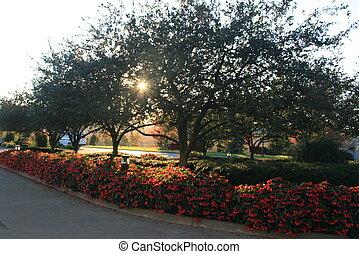 sun through tree branches
