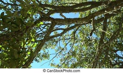 sun through tree move