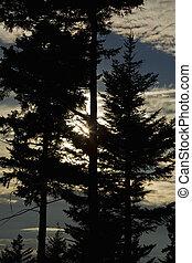 Sun, Trees, Silhouette