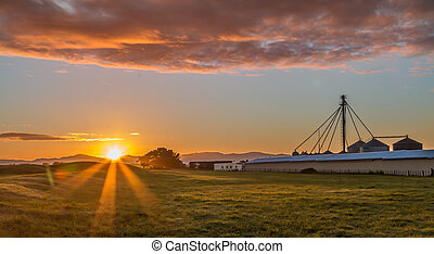 Sun Up Chicken Farm - Chicken farm silos and sheds at...