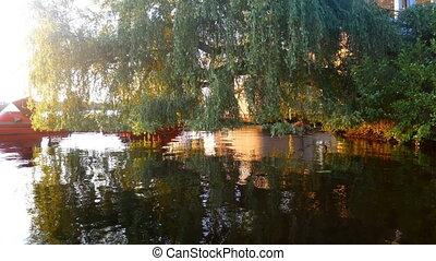 Sun water lake river branch