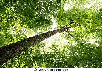 Sunbeam and Tree - Sunbeam through elm tree in the forest