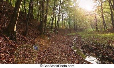 Sunbeam is breaking through forest