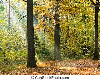 sunbeam lit lawn in autumn forest