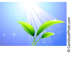 Sunbeam on a leaf background