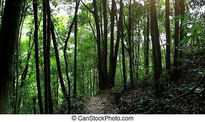 Sunbeam shine thru the tropical green forest. Koh Samui