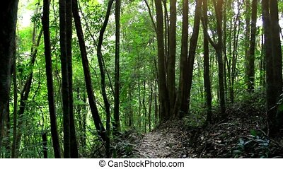 Sunbeam shine thru the tropical green forest Koh Samui