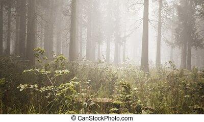 sunbeams, ель, лес, натуральный