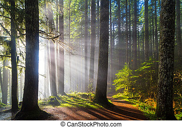 Sunbeams along Hiking Trails - Sunbeams at Lower Lewis River...