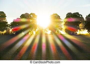 sunbeams filtered through leaves of tres, creating a prisma ...