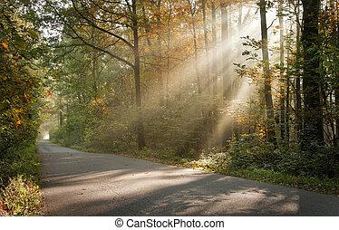 sunbeams filtered through leaves
