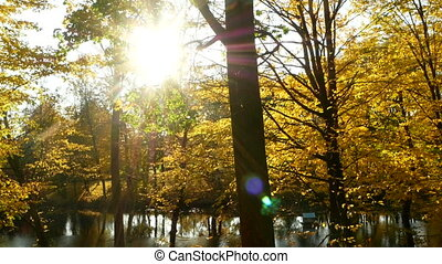 Sunbeams forest autumn