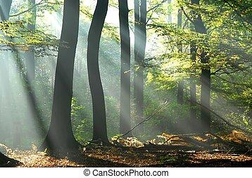 sunbeams, hæld, into, en, efterår skov