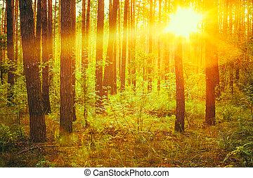 sunbeams., herbst, abfallend, sonnenuntergang, wald, unter