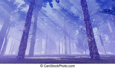 Sunbeams in foggy pine forest at dusk 4K
