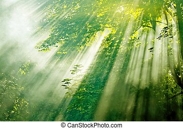 sunbeams in misty forest