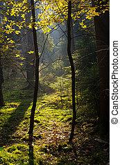 Sunbeams in the woods
