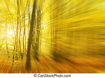 Sunbeams pour into the autumn forest.