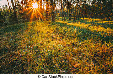 Sunbeams Pour Through Trees In Autumn Forest At Sunset. Russian