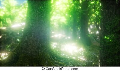 Sunbeams Shining through Natural Forest of Beech Trees -...