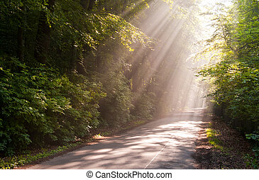 sunbeams - Sunbeams filters through forest leaves