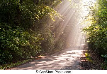 sunbeams - Sunbeams filters through forest leaves