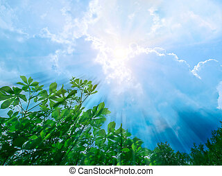 Sunbeams - sunbeams over jungle
