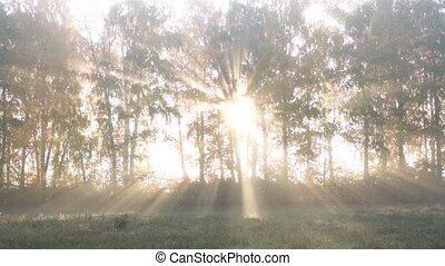 Sunbeams through fog and trees in autumn.