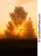 Sunbeams through tree in morning fog
