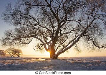 Sunbeams through tree on snowy meadow at sunset. Beautiful winter scene. Yellow sunlight. Snowy trees on icy lake shore covered by snow. Christmas background. Frost at evening.