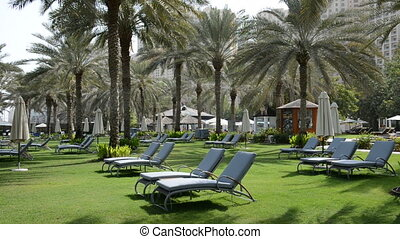 Sunbeds on the green lawn and palms