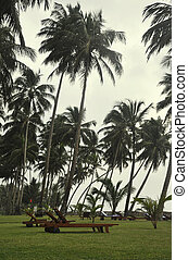 Sunbeds surrounded by Palm Trees on a cloudy day in Sri...